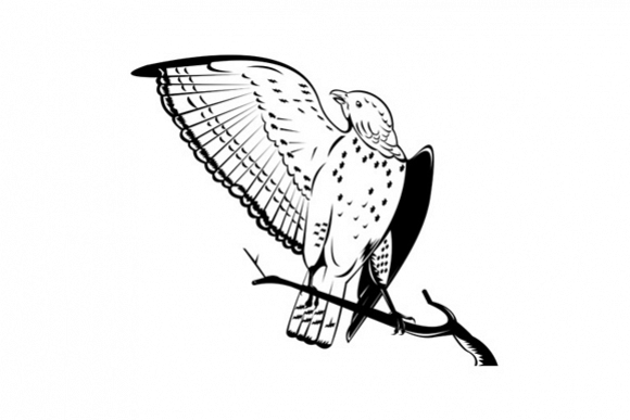 Broad Winged Hawk Perched On Branch example image 1