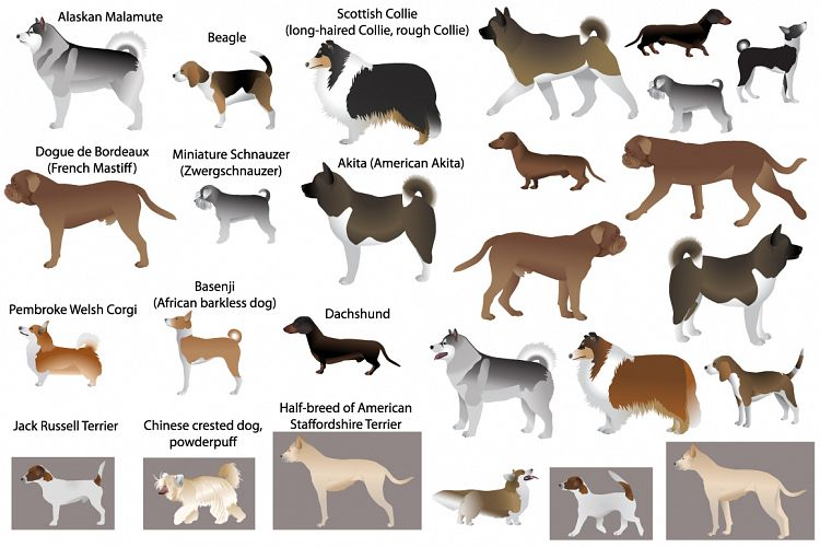 Dog show example image 1