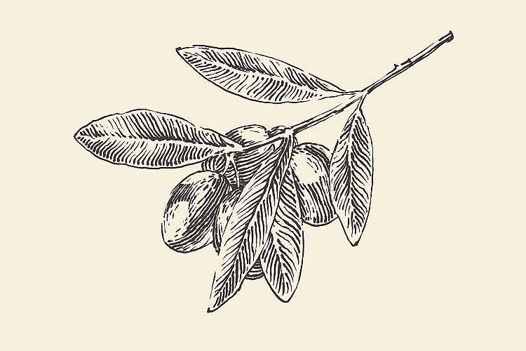 Olive tree branch example image 1