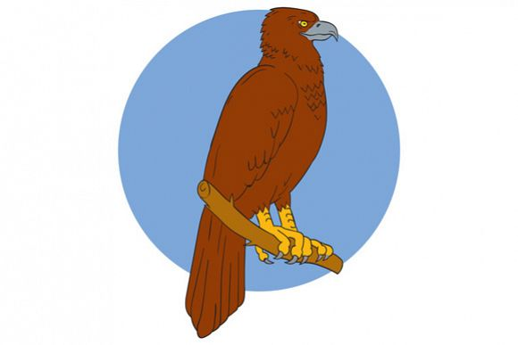 Australian Wedge-tailed Eagle Perch Drawing example image 1