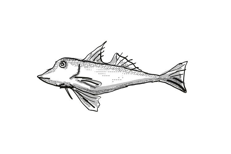 Red Gurnard New Zealand Fish Cartoon Retro Drawing example image 1