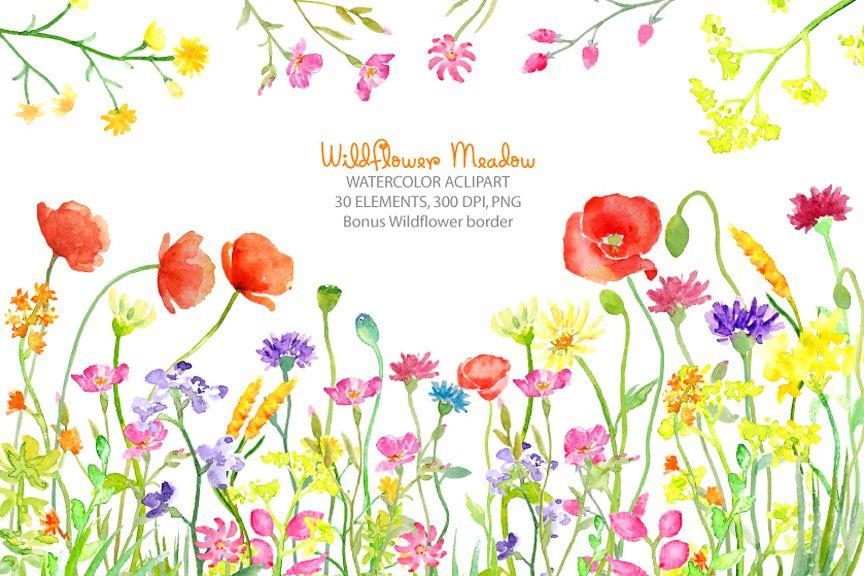 watercolor clipart wildflower meadow wild flower border for instant rh designbundles net wildflower clipart borders wildflower clipart borders