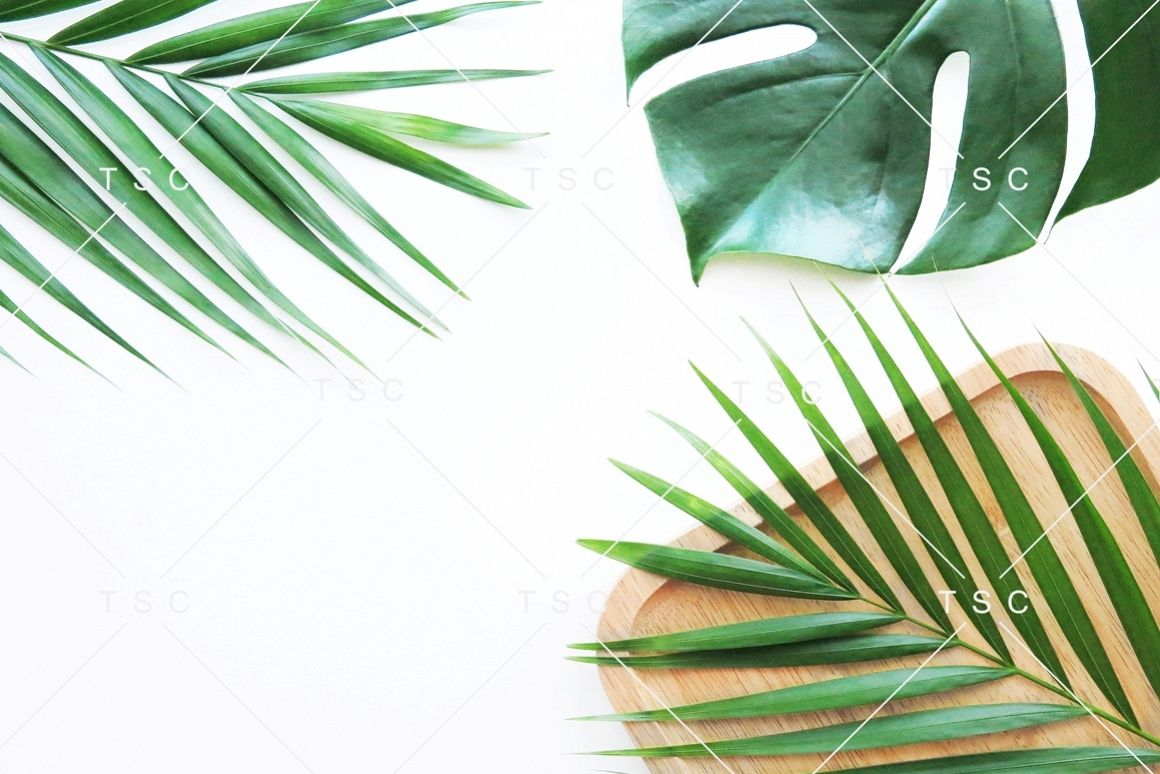 Tropical Leaves Stock Photo example image 1