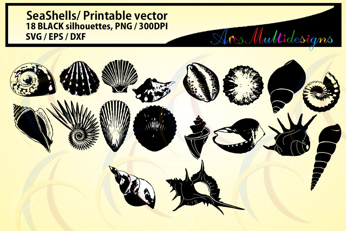 SeaShells silhouette / Sea shell /SVG / EPS / DXf vector sea shell / PNG / snails silhouette / Personal use, commercial use / High quality example image 1