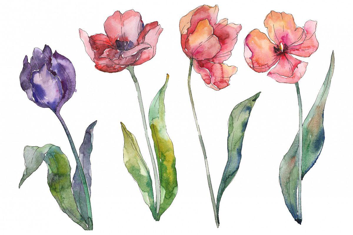 Bouquet of prometheus tulip Watercolor png example image 1