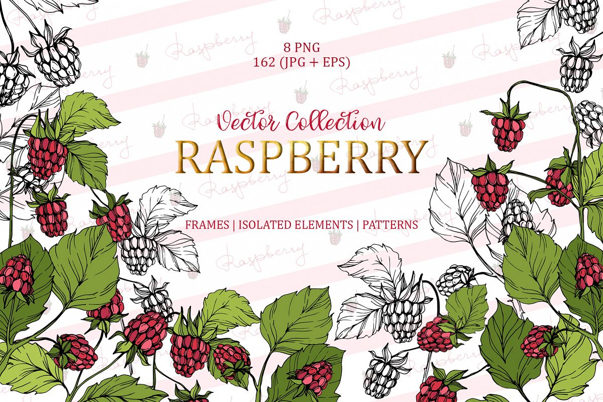 Raspberry Vector Collection example image 1