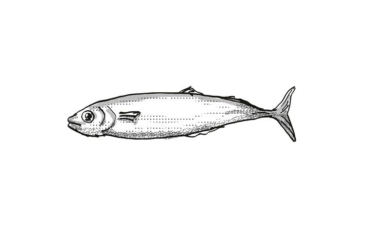 Koheru New Zealand Fish Cartoon Retro Drawing example image 1
