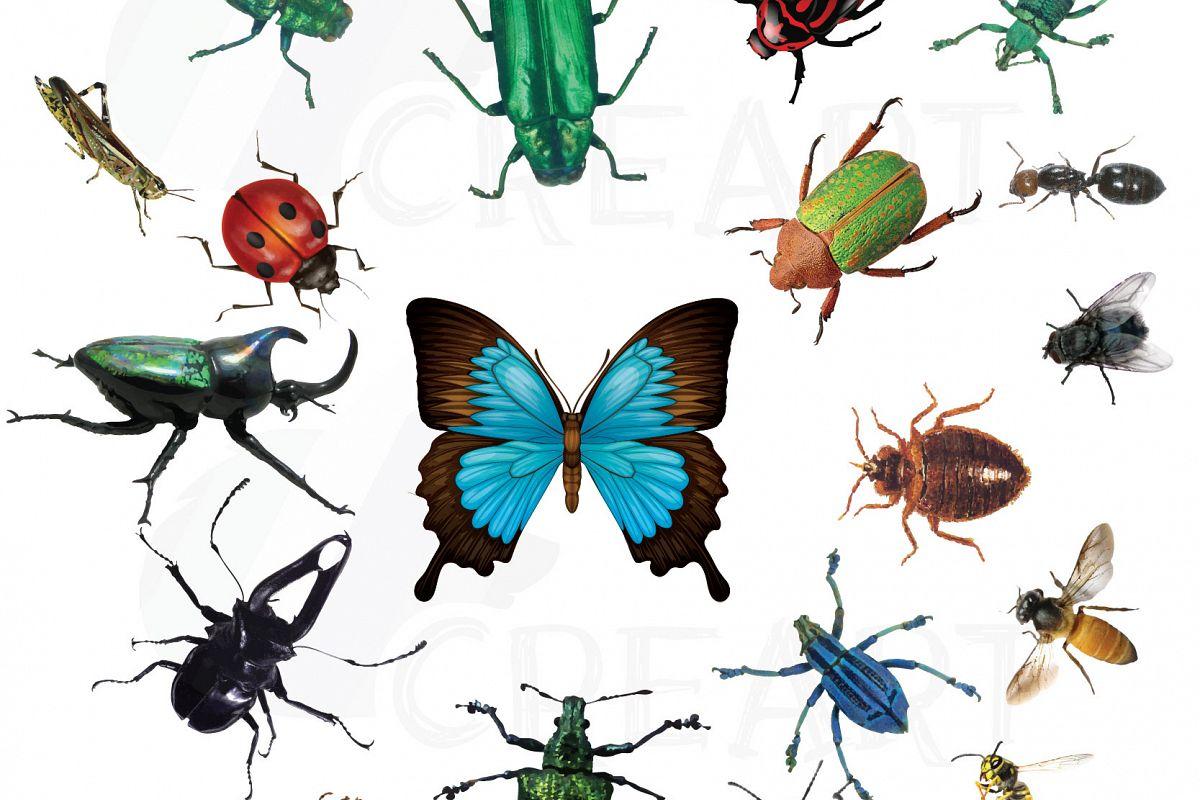 watercolor insects and bugs clipart pac design bundles rh designbundles net bugs clip art images bugs clip art images