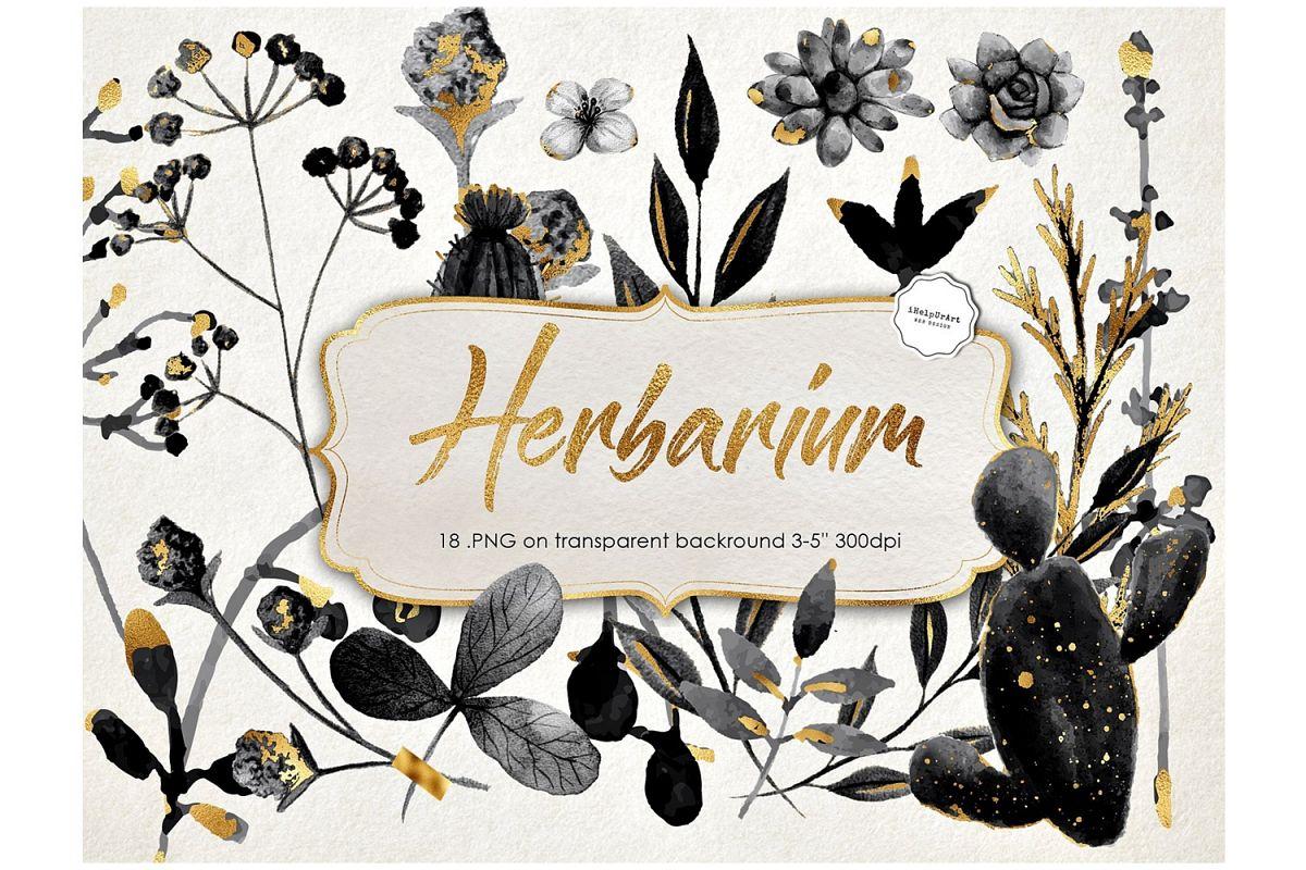 Herbarium Clipart example image 1