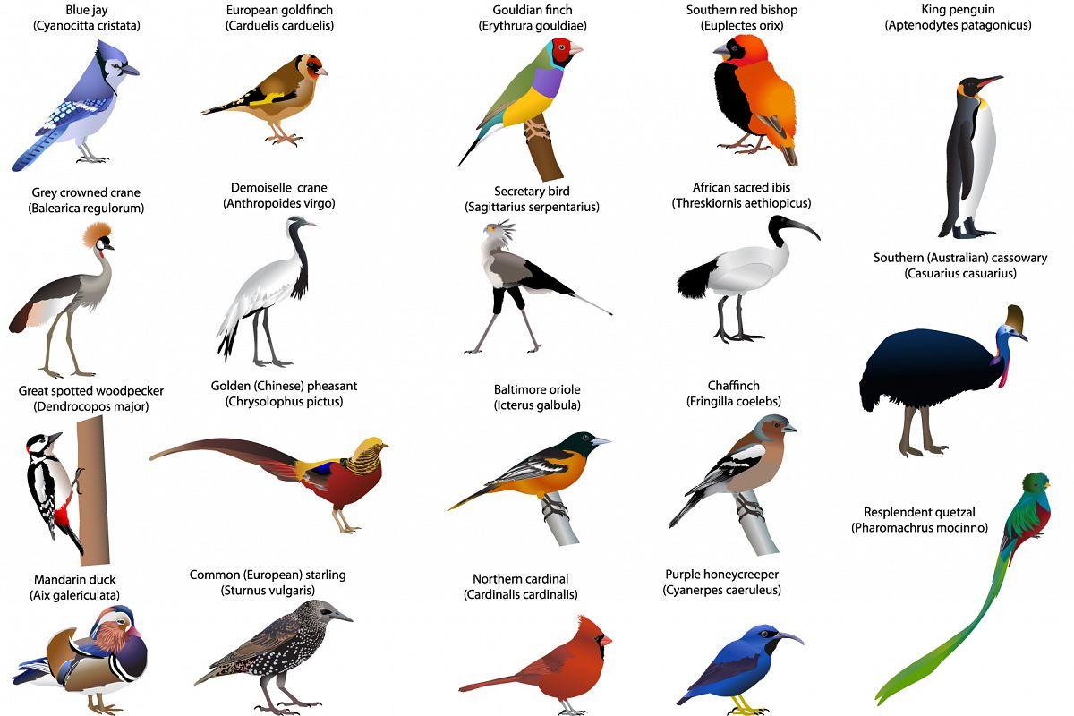 Birds example image 1
