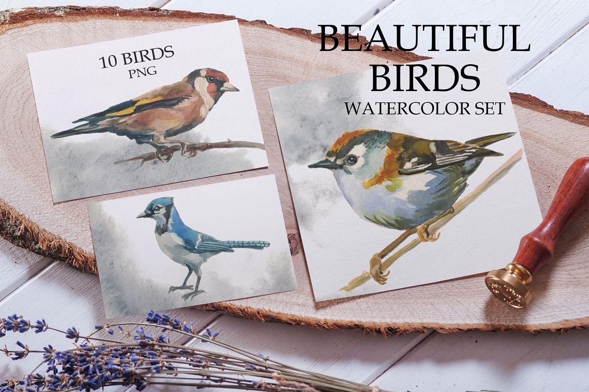 Beautiful birds example image 1