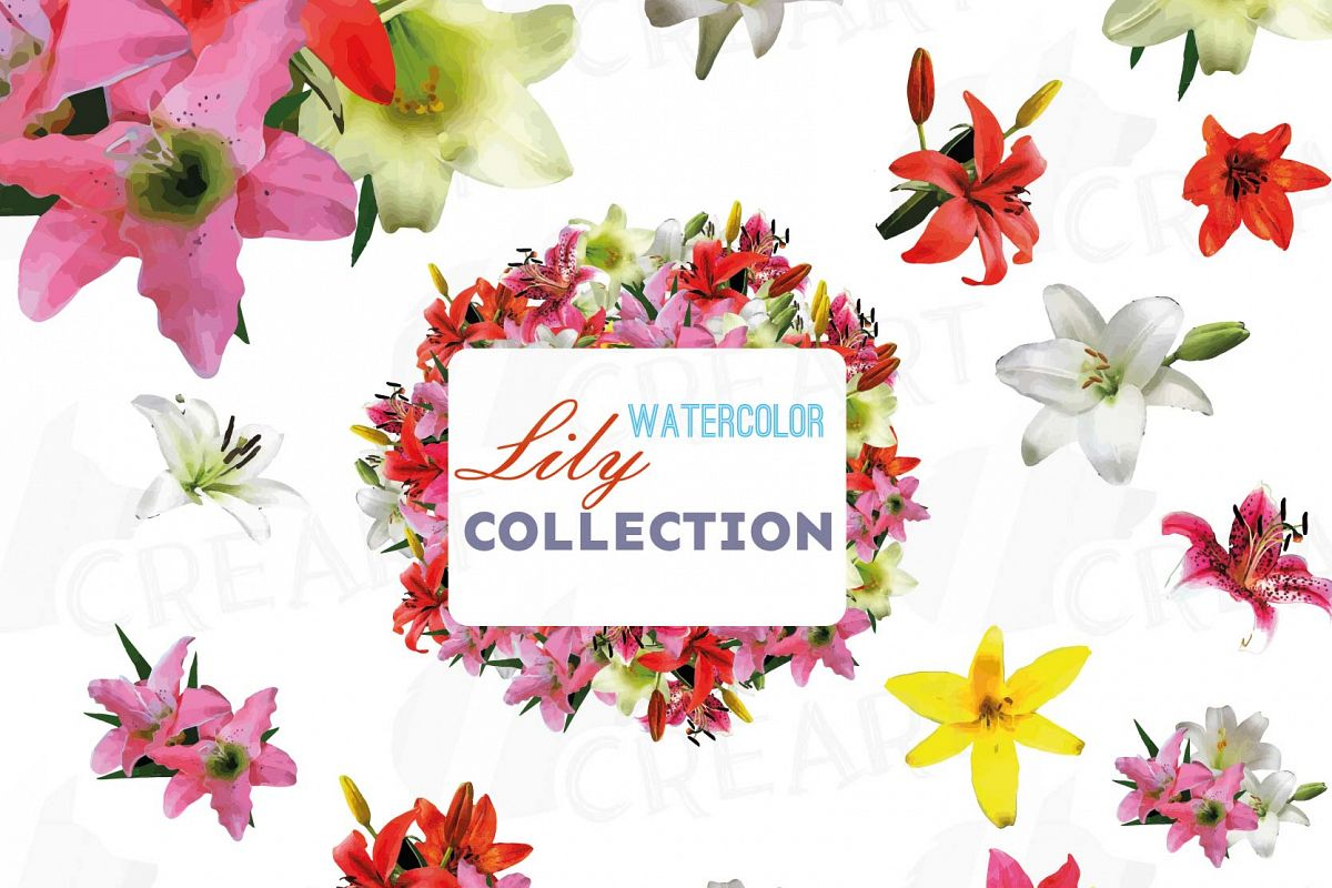 Lily Watercolor Clip Art Pack Colorful Lily Flowers Lily Bouquet