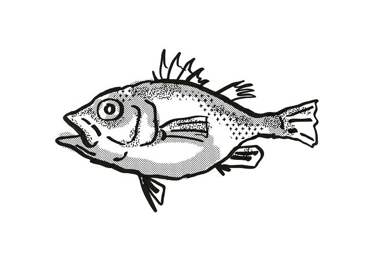 Spinycheek Seabass Australian Fish Cartoon Retro Drawing example image 1