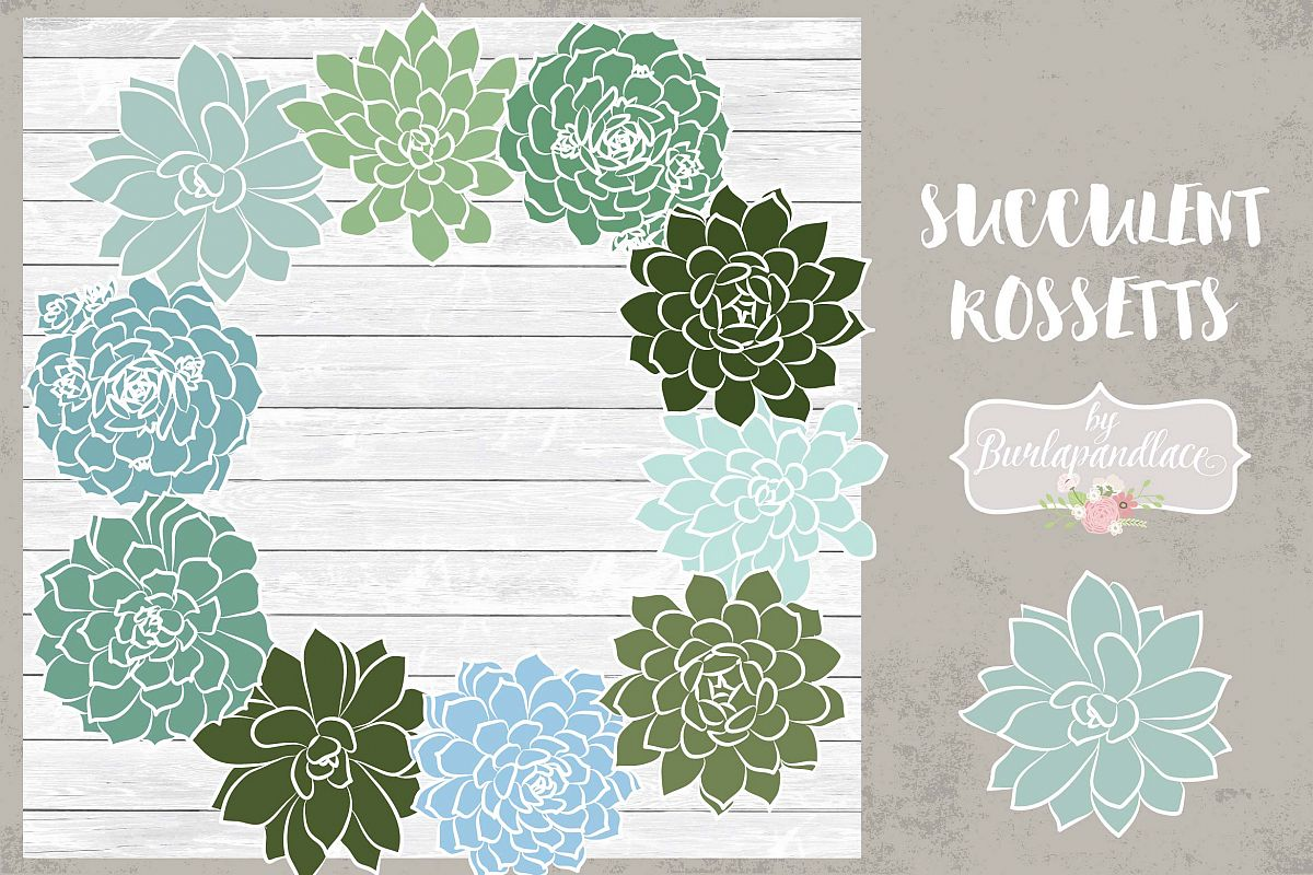 Vector succulent rosettes example image 1