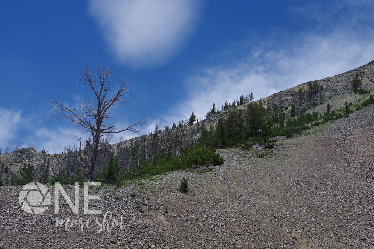 Yellowstone National Park Hillside Burned Trees Flowers example image 1