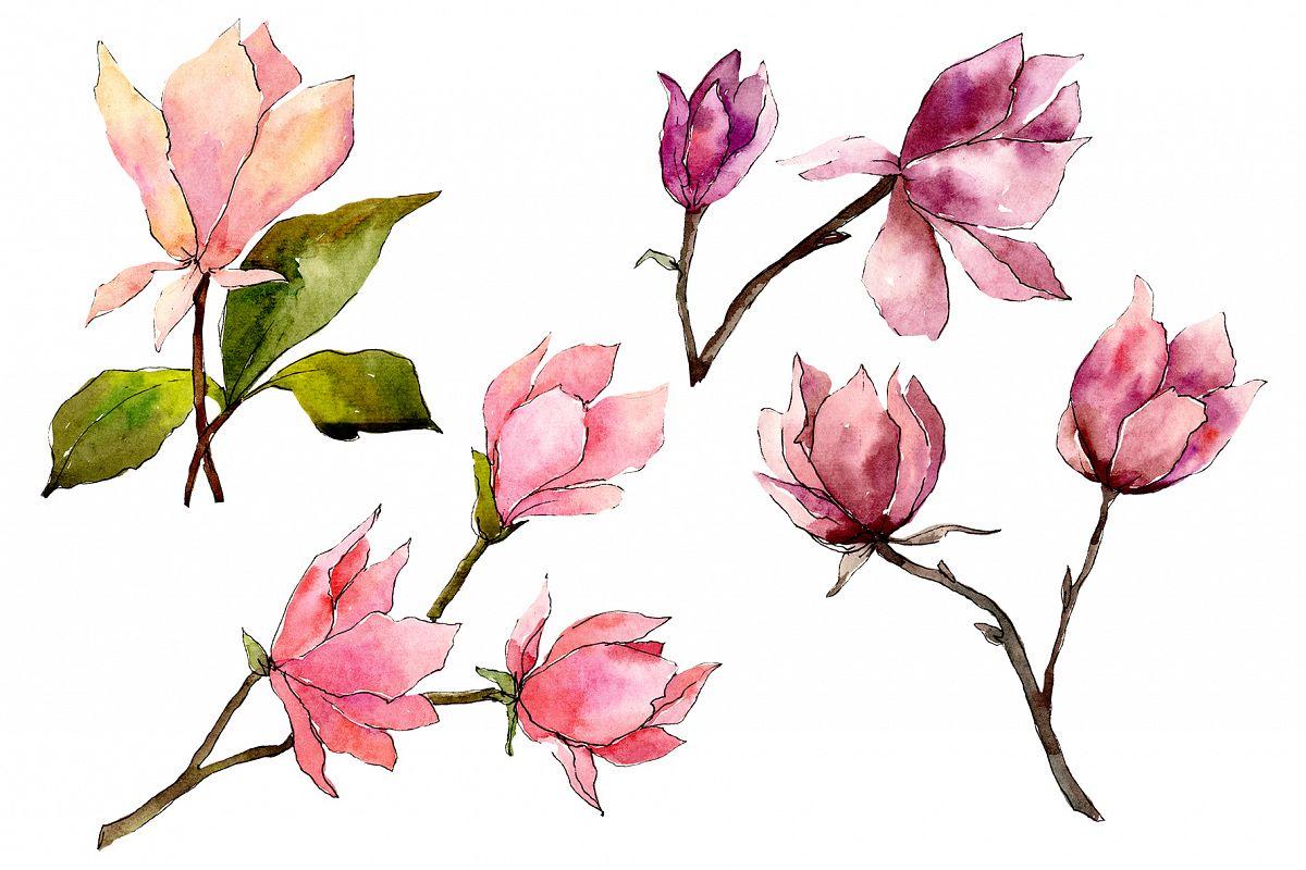 Tender pink magnolia PNG watercolor set example image 1