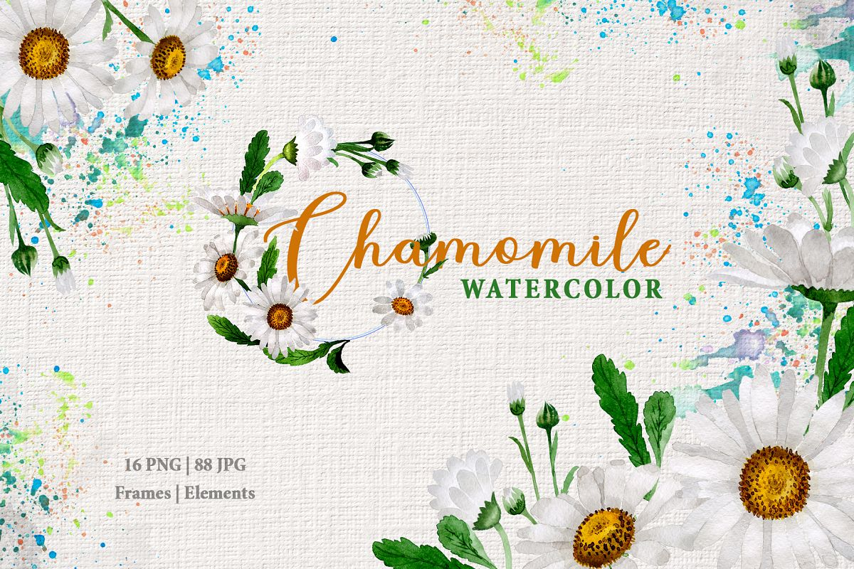 Chamomile white Watercolor png example image 1