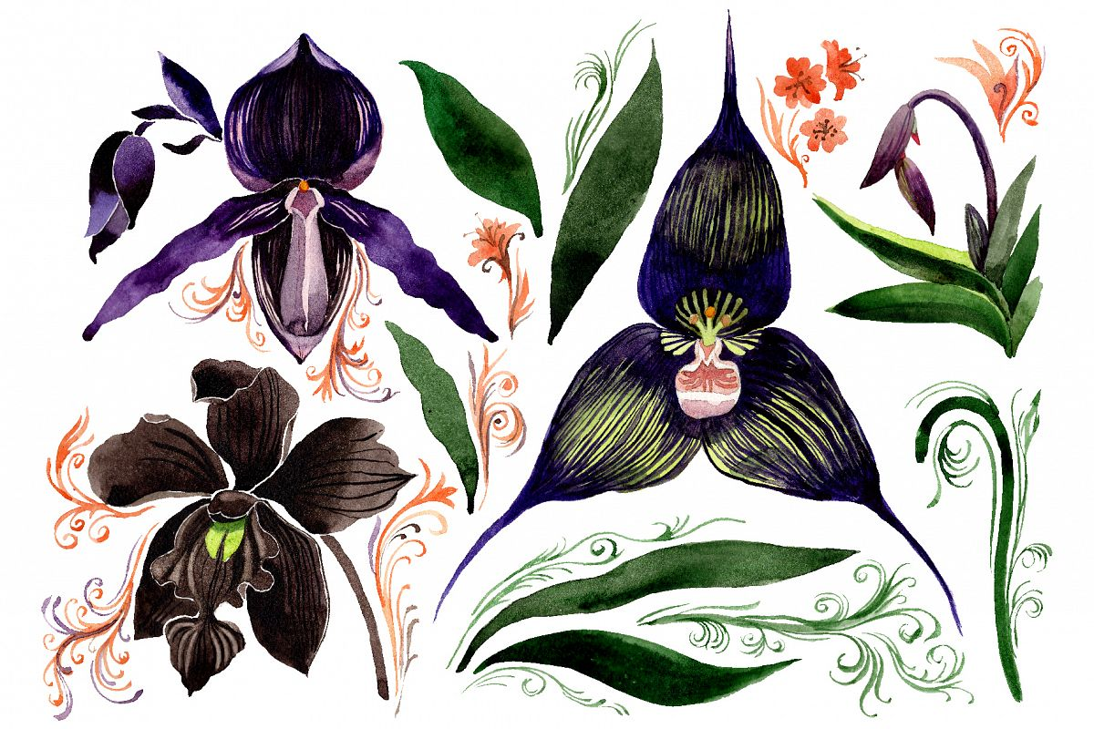 Orchid black Watercolor png example image 1