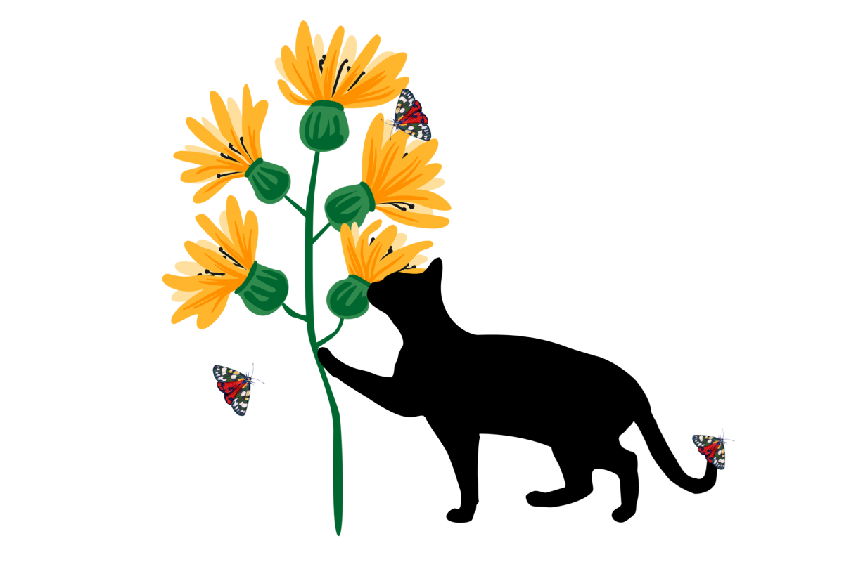 Cat with Sunflowers and Butterflies Nature PNG Transparent example image 1
