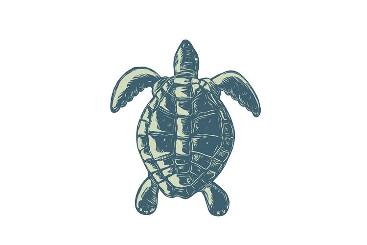 Sea Turtle Top View Scratchboard example image 1