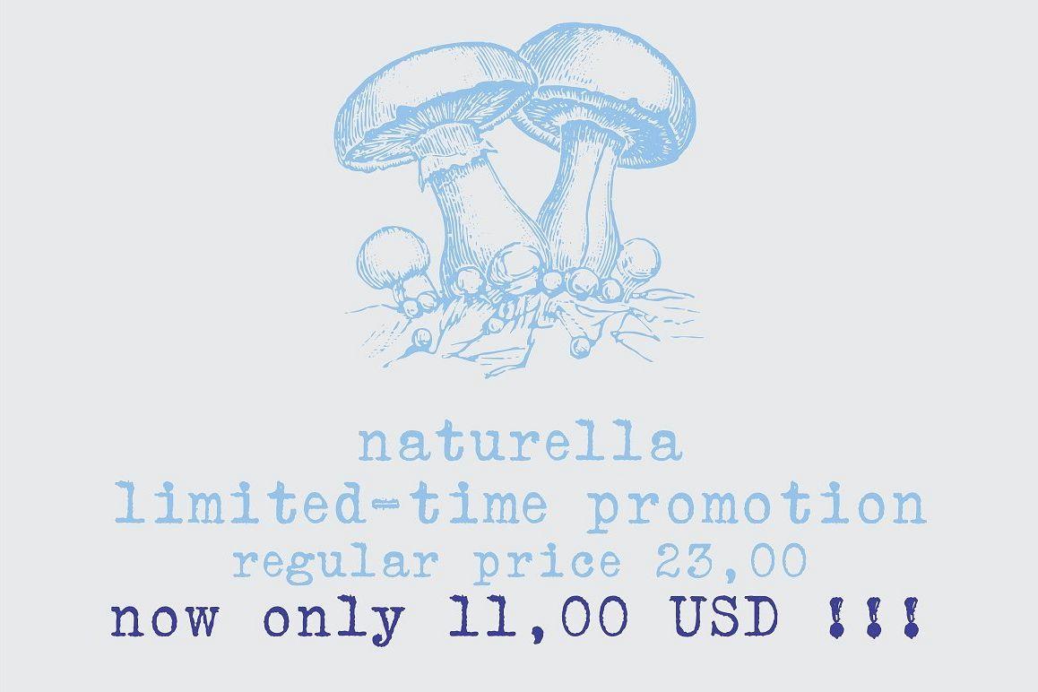 Naturella, organic dingbats example image 1