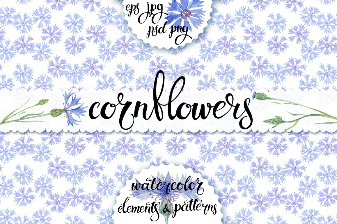 Cornflowers. Watercolor set. example image 1
