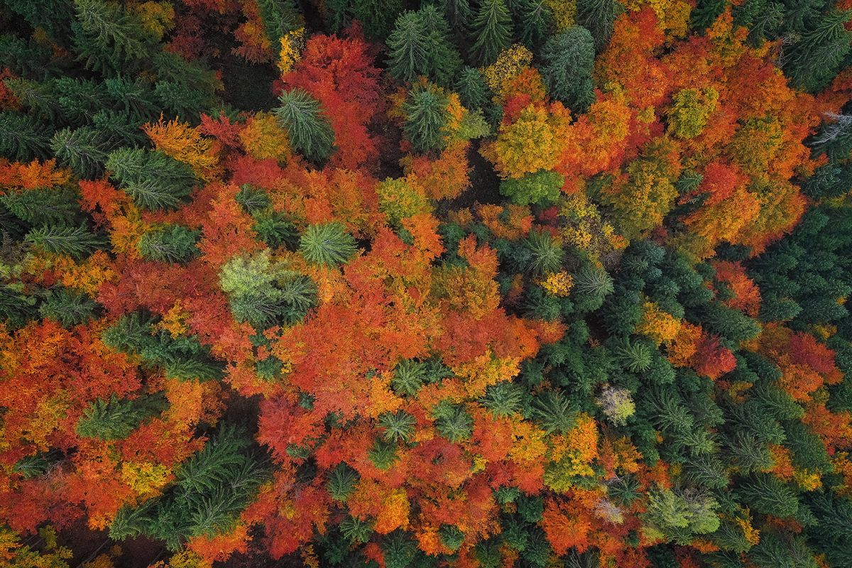 Autumn trees from above example image 1