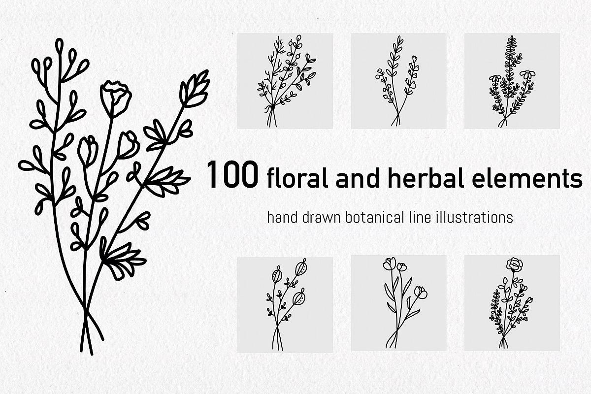 Floral and herbal elements. Hand drawn botanical art. example image 1