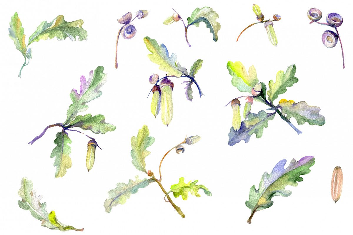 Acorn Watercolor png example image 1