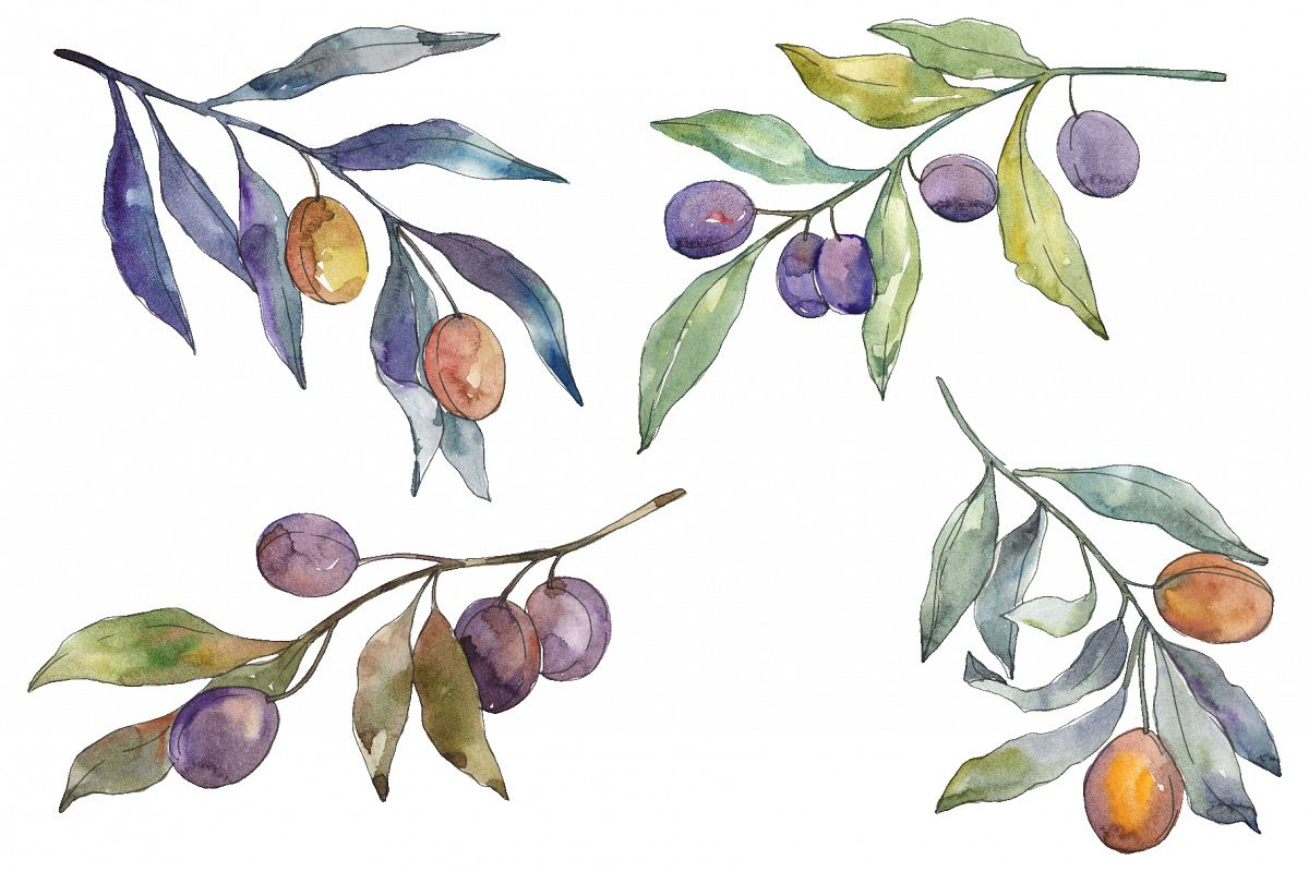 Olives 3 Watercolor png example image 1