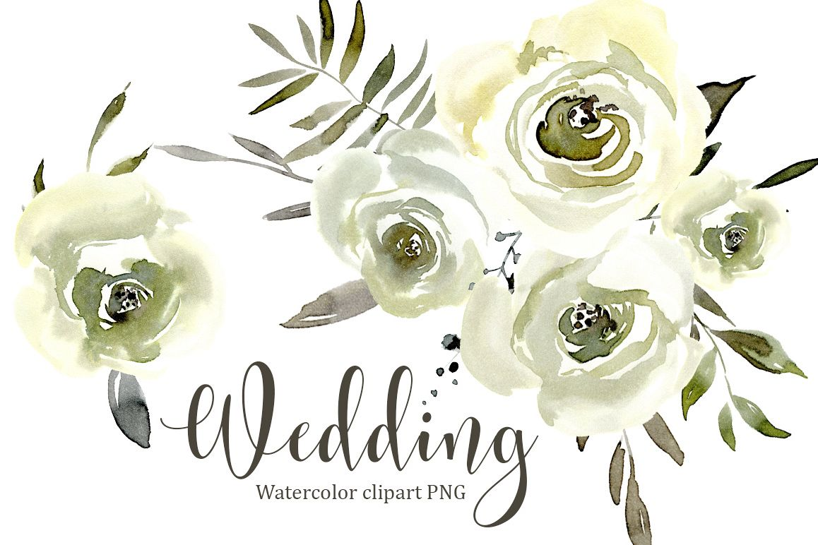 Watercolor White Roses Flowers Png Set