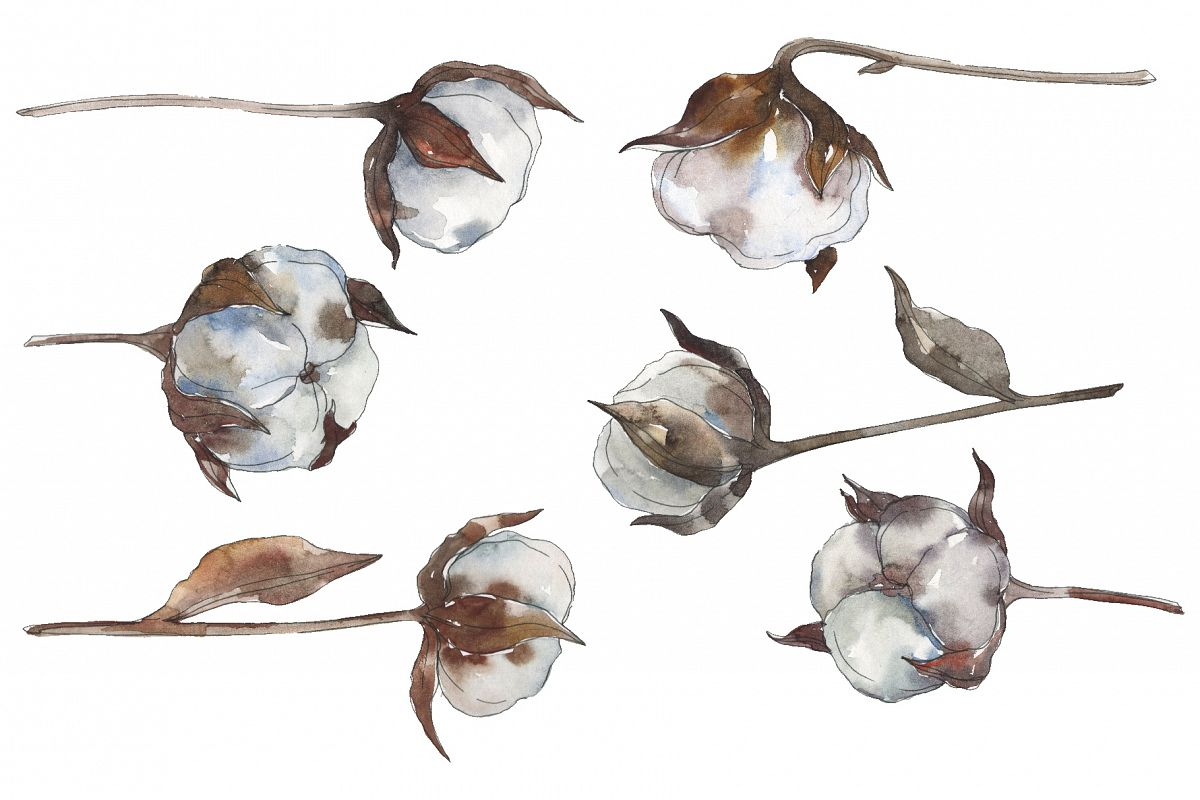 Cotton 2 Watercolor png example image 1