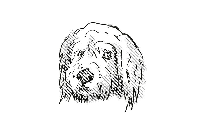 Goldendoodle Dog Breed Cartoon Retro Drawing