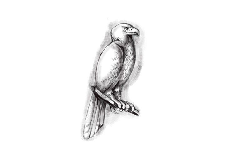 Australian Wedge-tailed Eagle Perch Tattoo example image 1