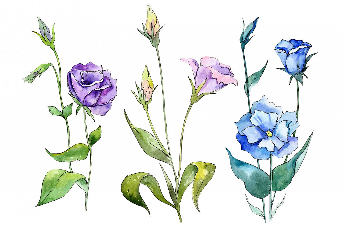 Blue and purple eustoma PNG watercolor set example image 1