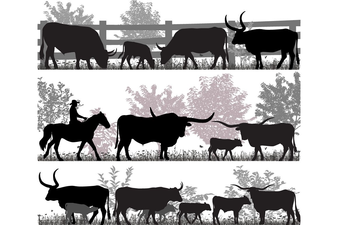 Texas longhorn cattle example image 1