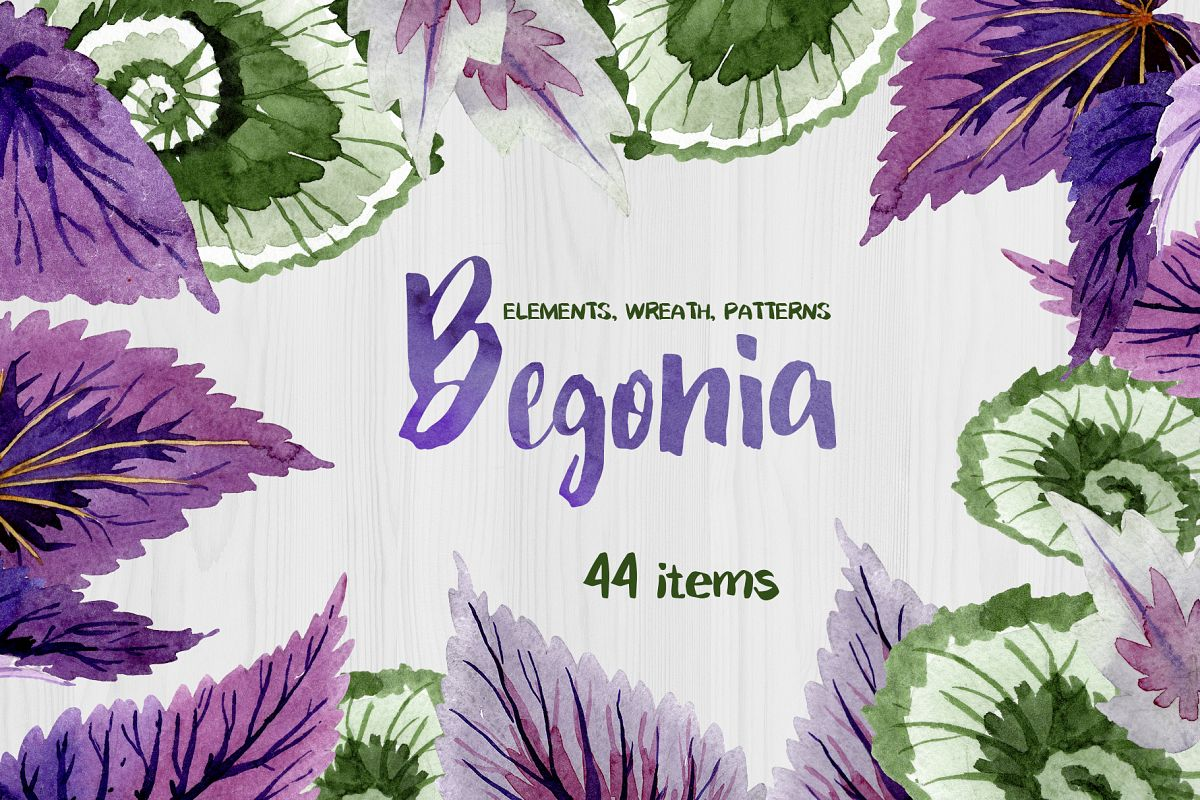 Decorative begonia purple watercolor png example image 1