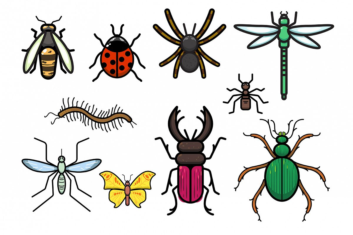 Insects Set example image 1