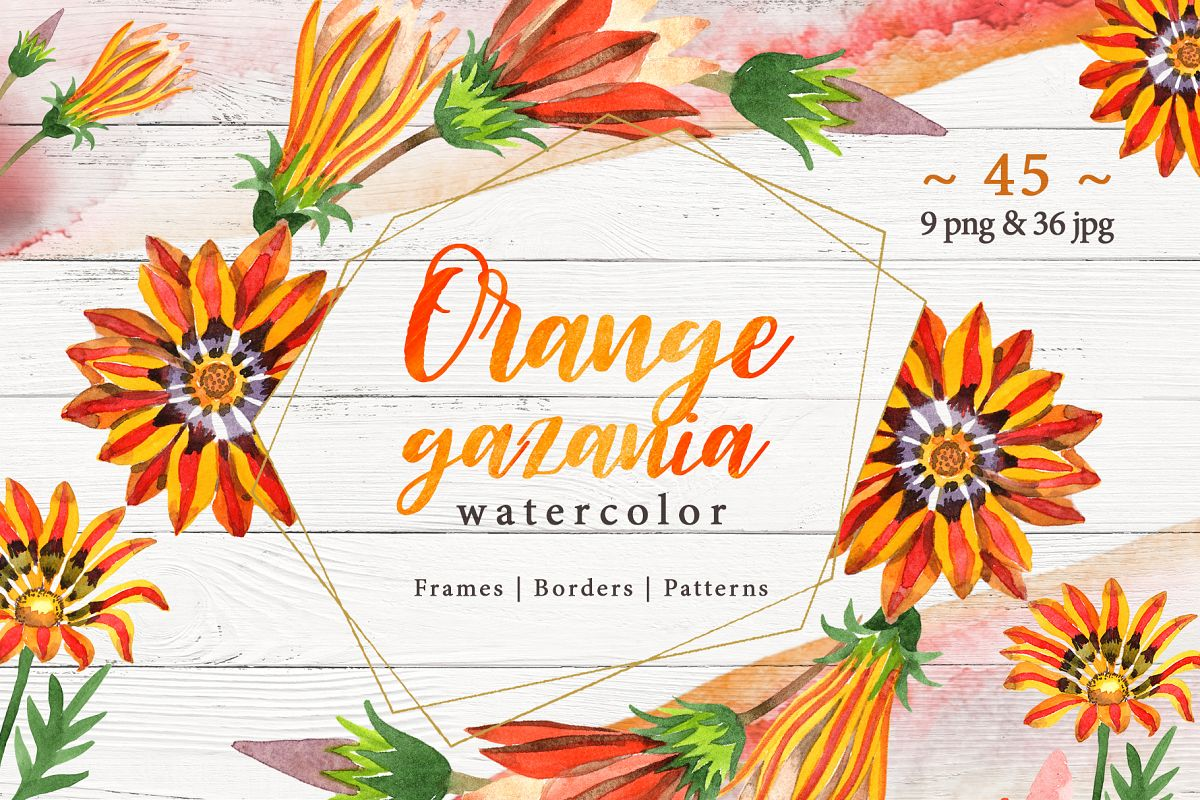 Cool orange gazania PNG watercolor set example image 1