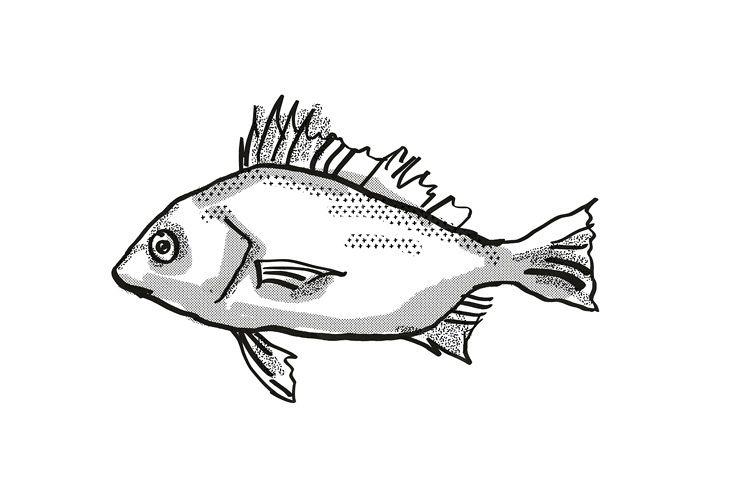 Silver Javelin Australian Fish Cartoon Retro Drawing example image 1