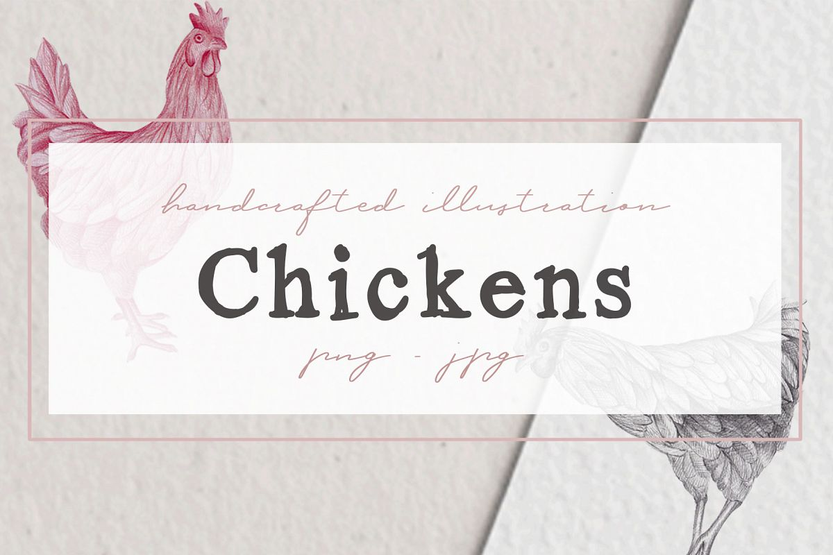 Hand drawn Chicken Illustrations example image 1