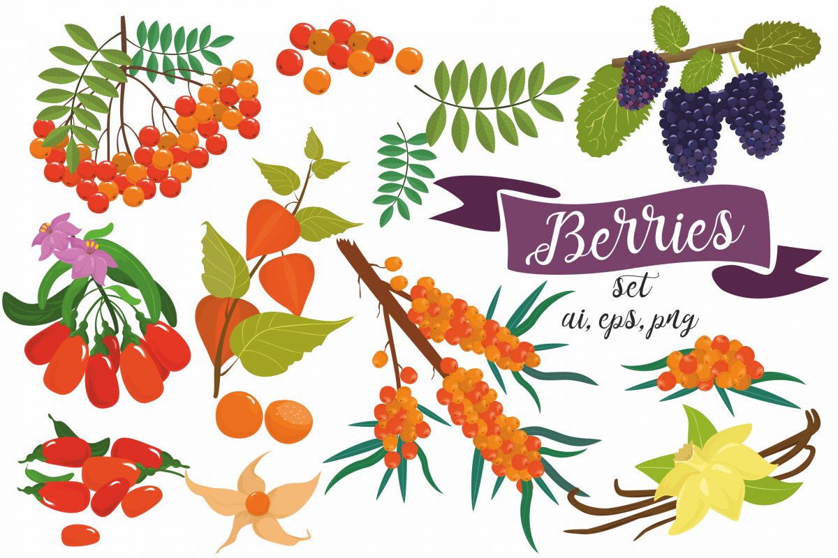 Superfoods. Berries. Patterns. example image 1
