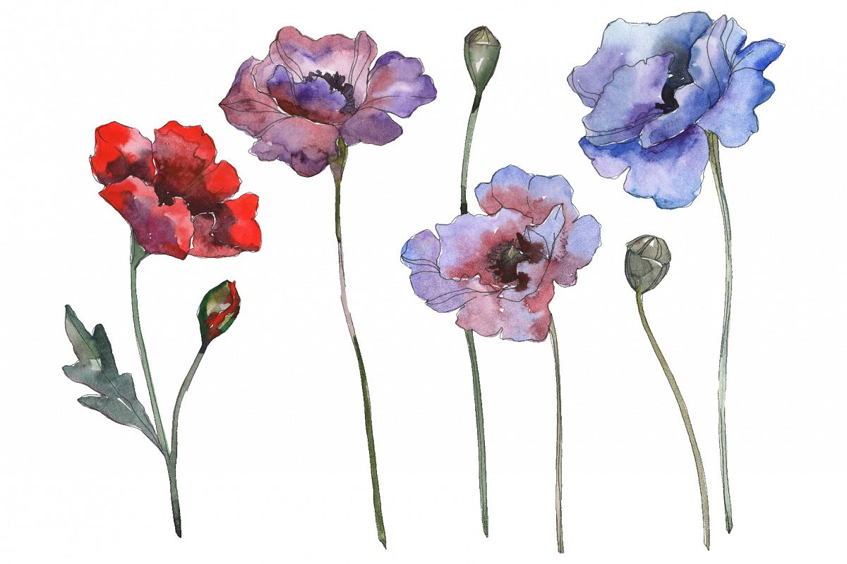 Poppy 1 Watercolor png example image 1