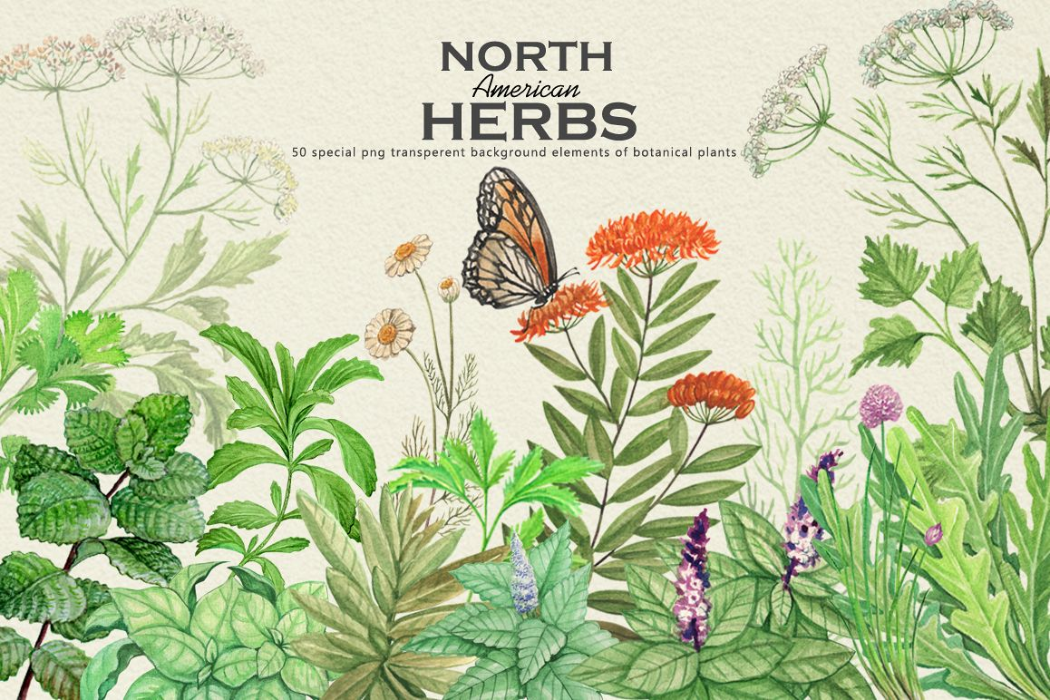 North American Herbs example image 1