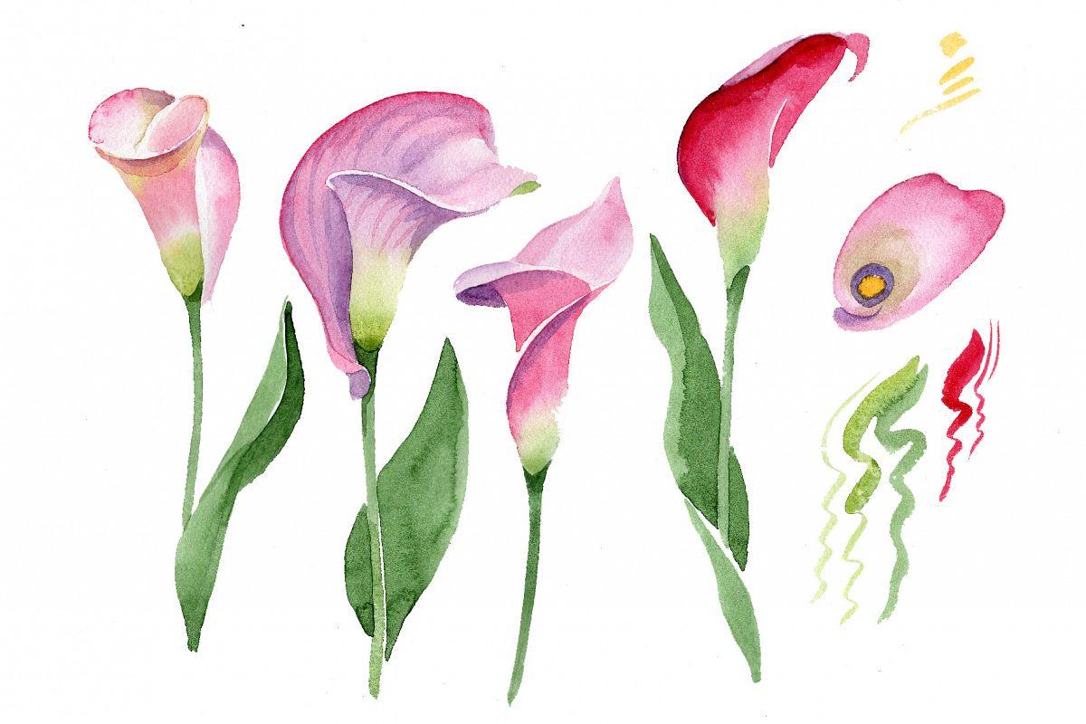 pink calla flower png watercolor set by design bundles