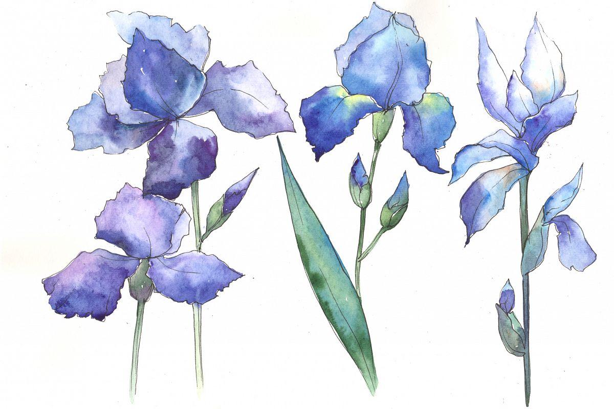 Watercolor blue irises flowers png set watercolor blue irises flowers png set example image 1 izmirmasajfo