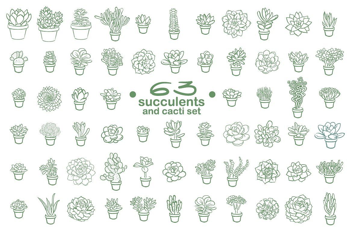 63 Succulents illustration set example image 1