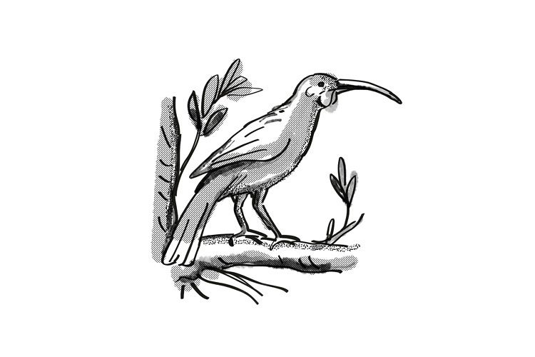 huia New Zealand Bird Cartoon Retro Drawing example image 1