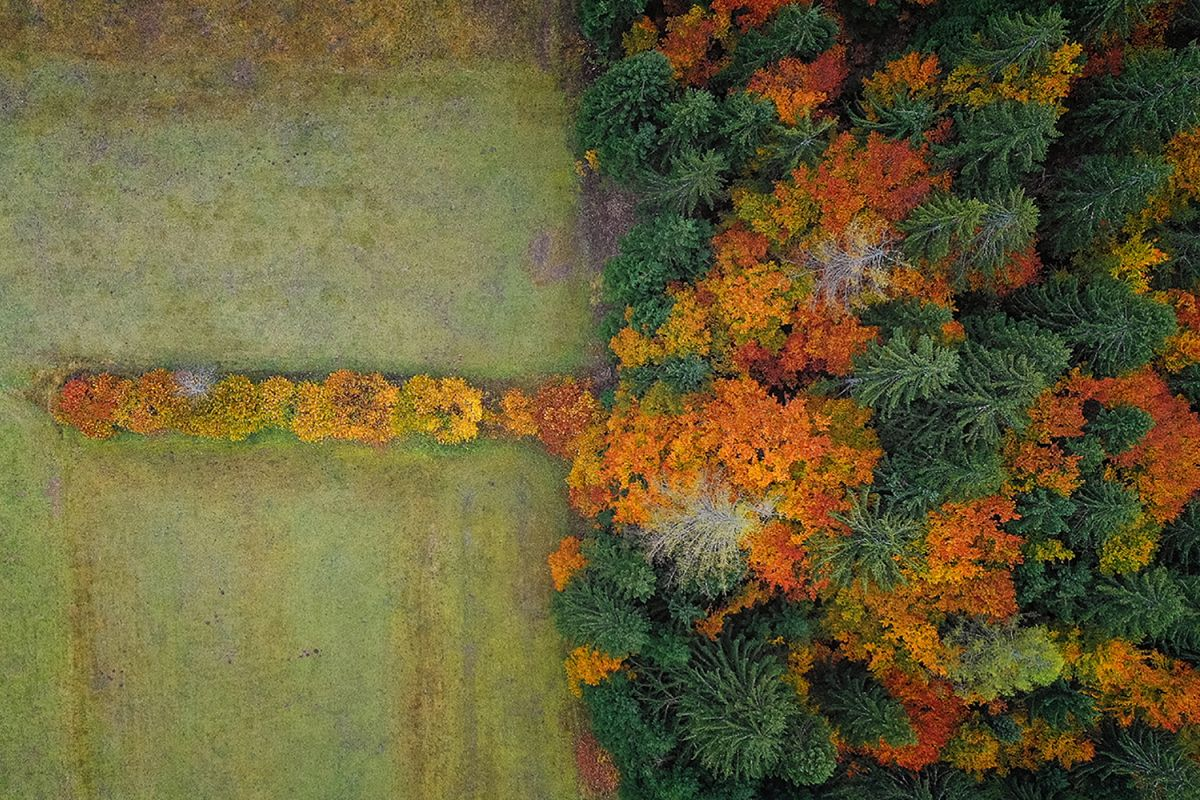 Autumn forest from above example image 1