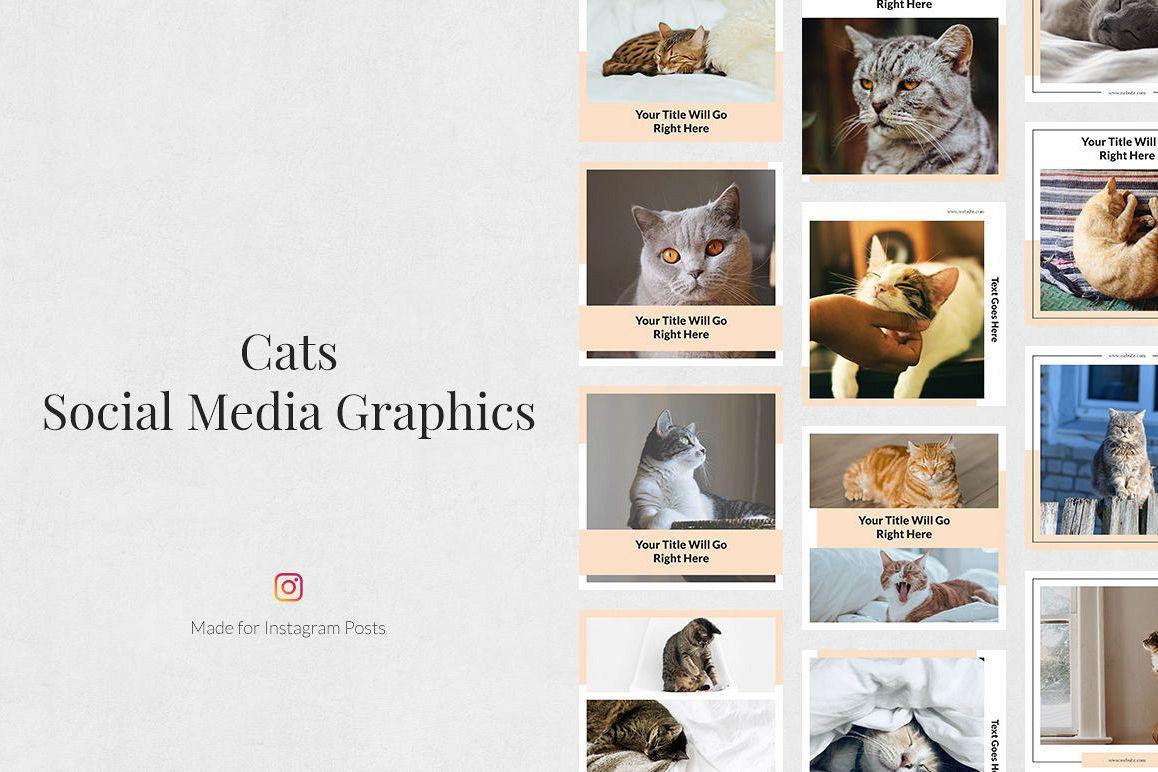 Cats Instagram Posts example image 1